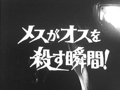 バーディー大作戦 第32話 メスがオスを殺す瞬間!